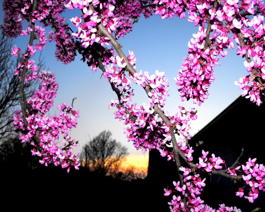 Remembering Spring by LadyRavenhawk