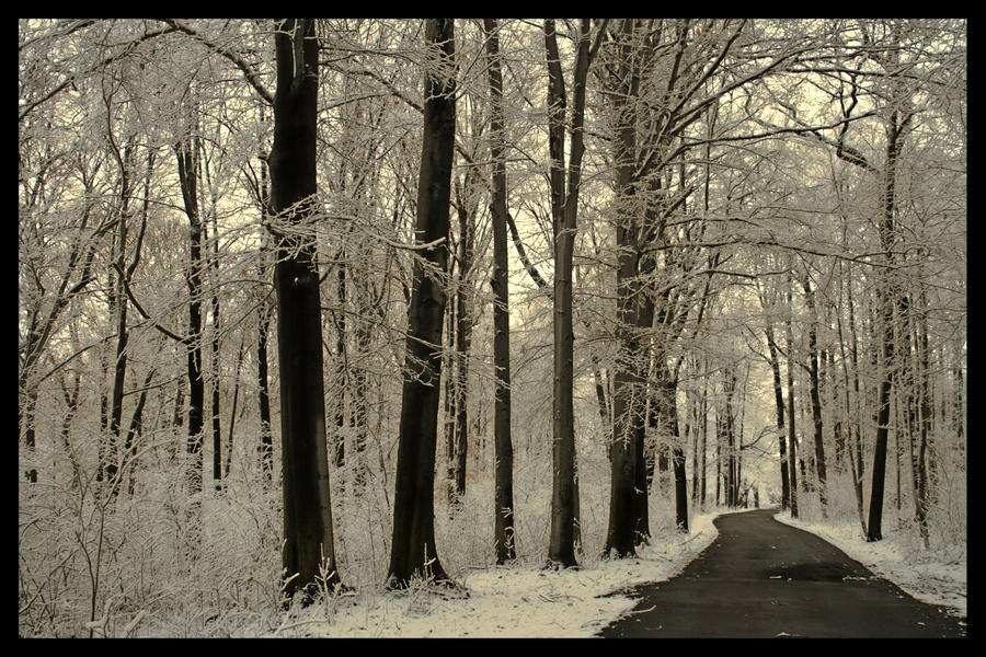 The Road to Florida by jmarie1210