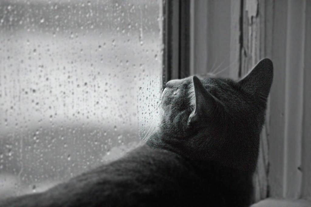 Rain Drops Keep Falling On My Head by jmarie1210 on deviantART