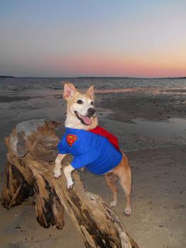 Supernova at the Beach