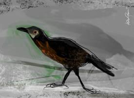 My Blackbird by altergromit