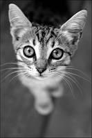 CAT by govorit-vsluh