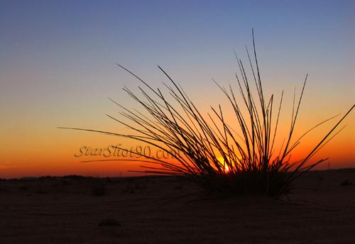 sunset among desert by starshot90