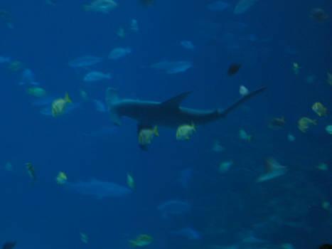 Deep ocean hammerhead