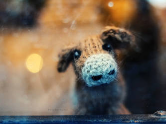 feeling woolly by bluePartout