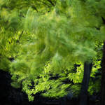 flamenca verde by bluePartout