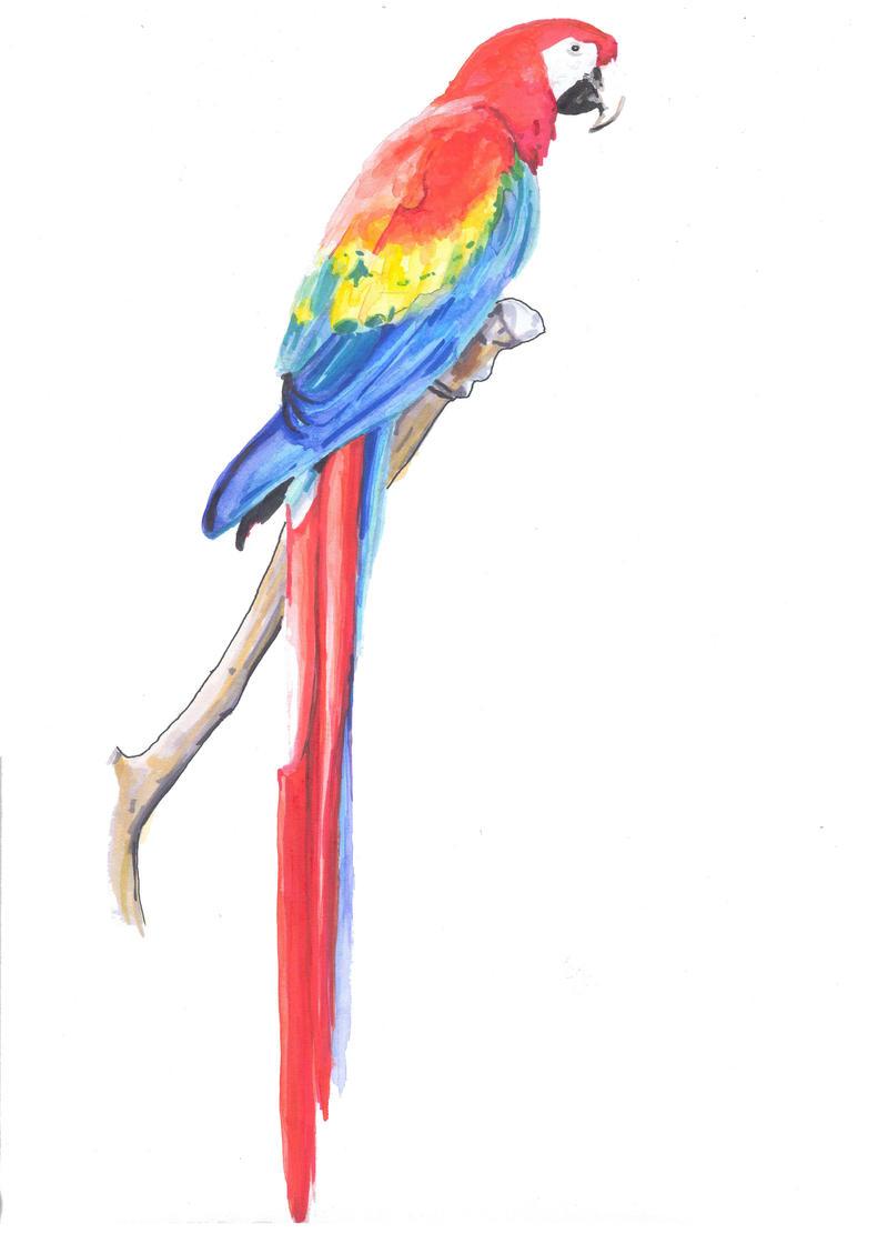 Dibujos De Guacamayas - dibujo de p jaro guacamayo para colorear ...