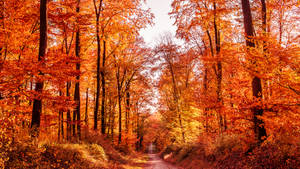 Orange Road II