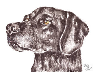 Black Dog Watercolor Painting by erika-lancaster85