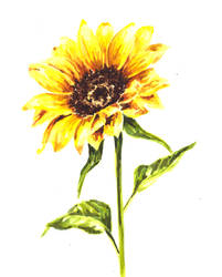 Watercolor Sunflower by erika-lancaster85
