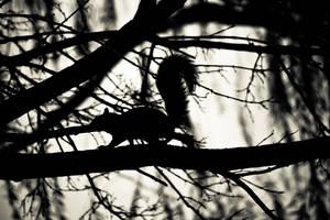 The Stalker by vwake