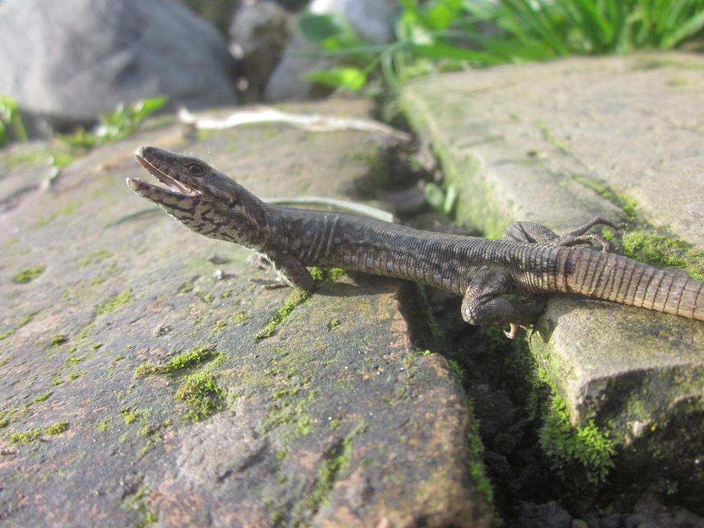 Lizard 2 by MajcheZmajche