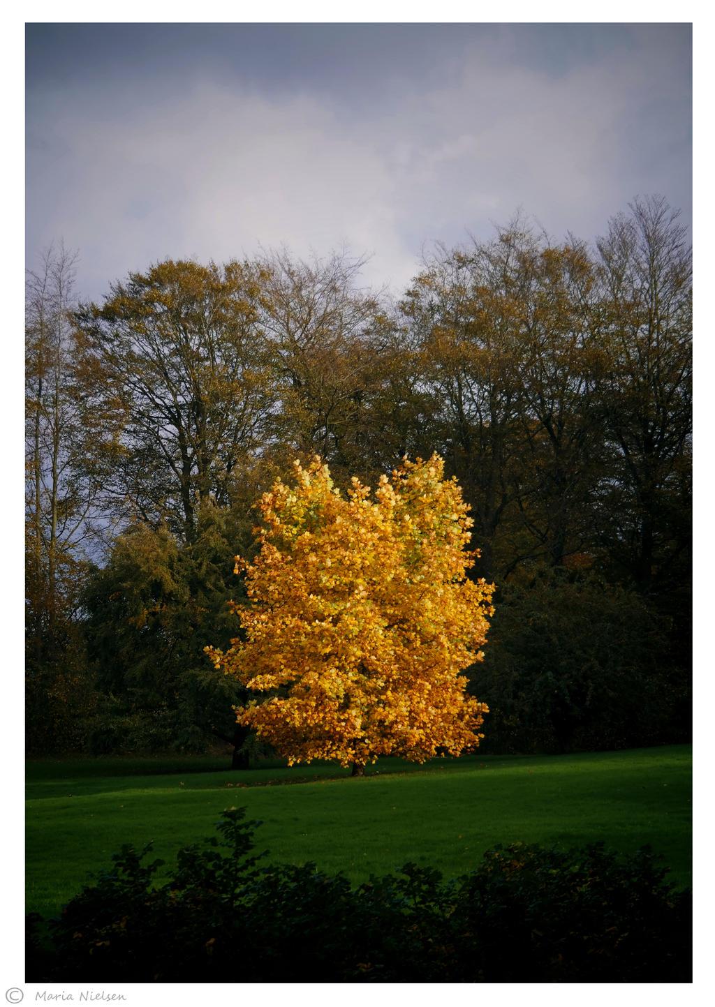 Fall in the Queens Garden by Moonbird9