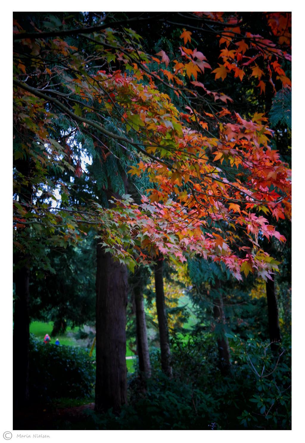 Fall in the Queens Garden 2 by Moonbird9