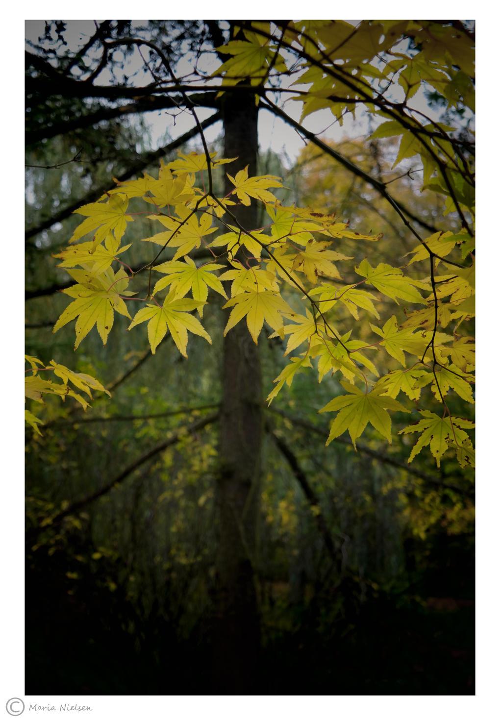 Fall in the Queens Garden 3 by Moonbird9