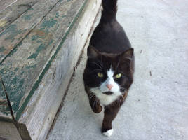 Ma kitty by Doodlopend
