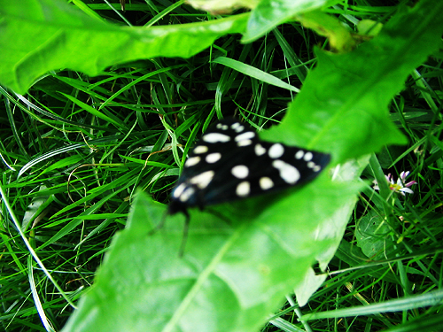 Butterfly by miserydoll