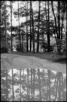 puddle forest