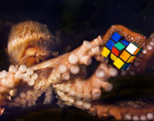 octopusexchange's Profile Picture