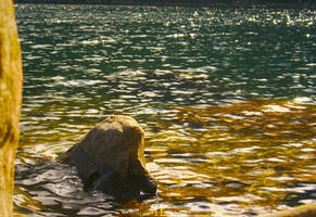 Gold Waters by PaoloCuscela