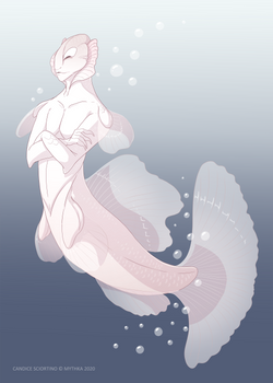 White Opal Betta ~ Day 21