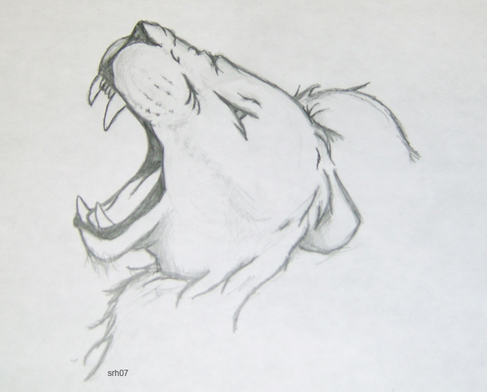easy lion drawings in pencil - photo #16