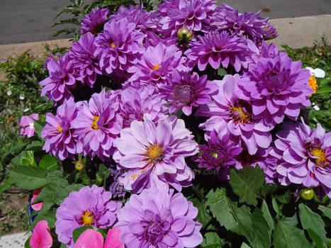 Flowers of Santa Fe 2