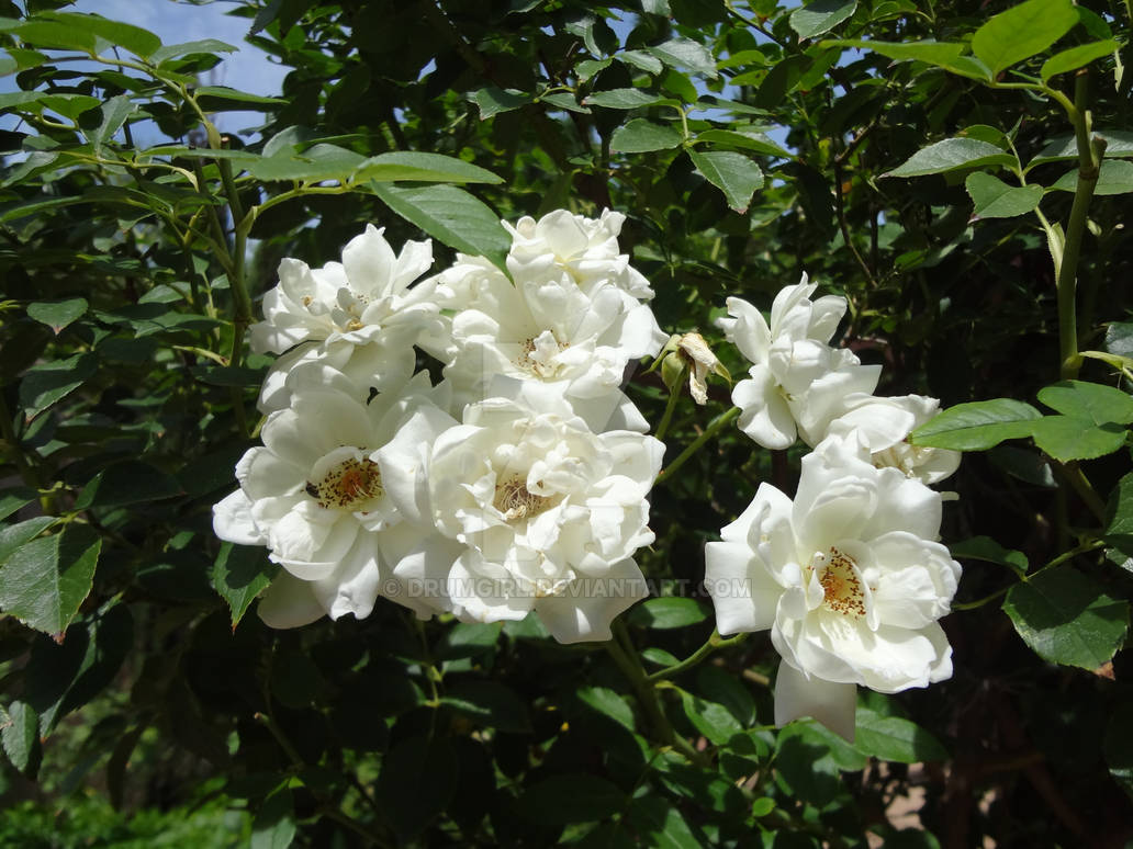 Flowers of Albuquerque