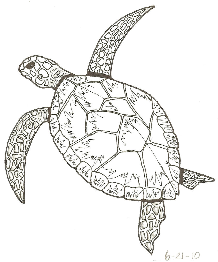 Line Drawing Turtle : Elsie s turtle lineart by mayberry on deviantart