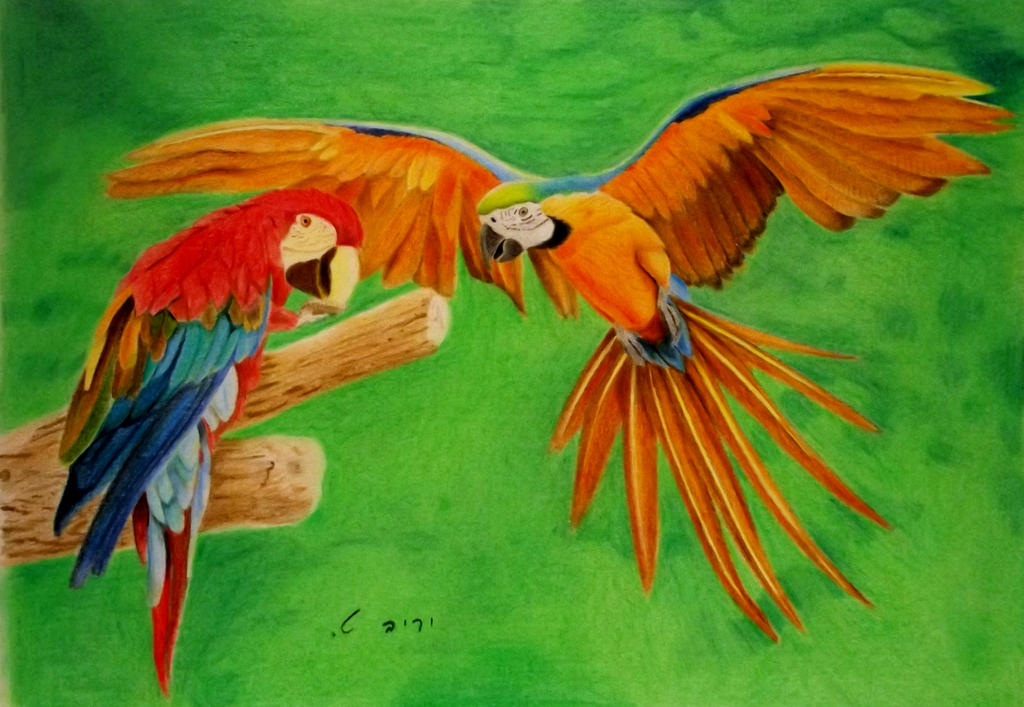 Pair of Parrots by yarivt