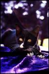 Kitty in Purple