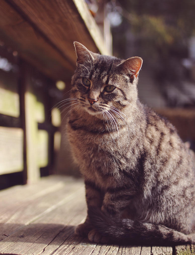 Pretty Kitty by kbhollo