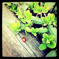 Ladybug by nuexxchen
