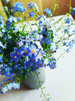 Blue by nuexxchen