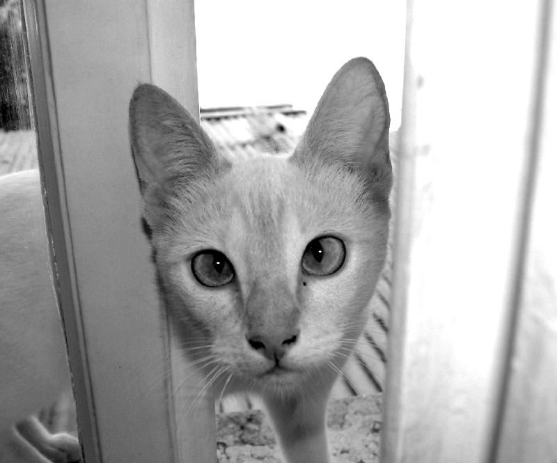 Cat on a window by jabreu