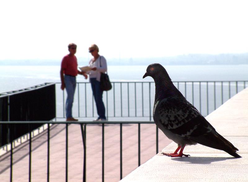 Tourist escort by jabreu