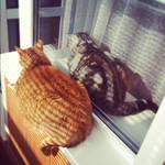 Synchronized (Garfield + Nermal)