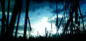 Azure Waves of Grain by ClumsyBoy