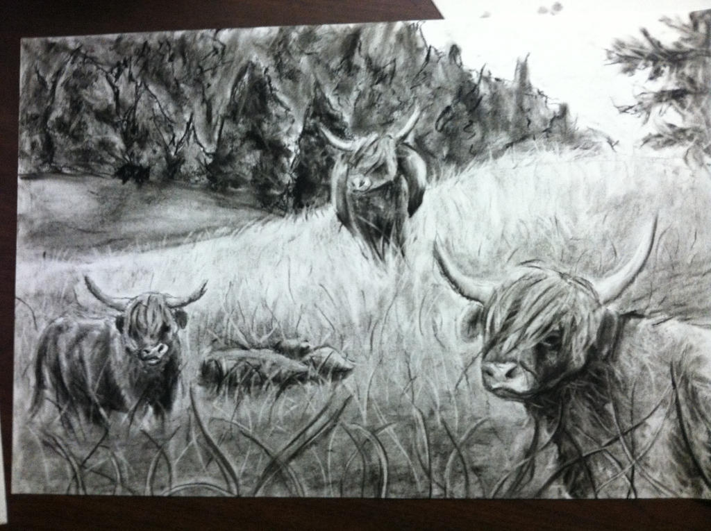 Highland Cows by PankcakeWizard