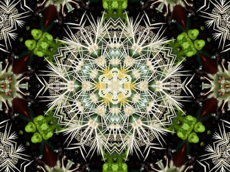 Fractal Cactus MandalaSpinoso
