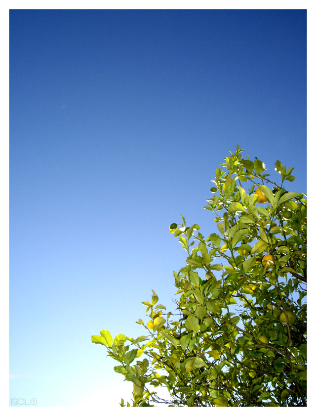 Me, A Lemon Tree and the Sky. by paolo91