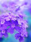 Tender Purple