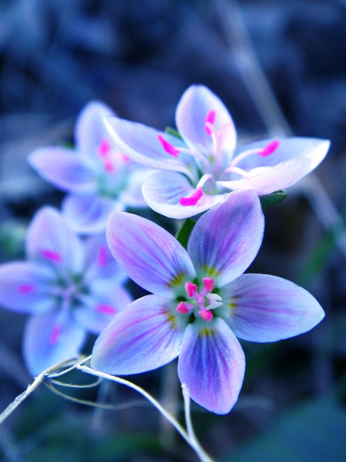 Soft Flowers by Birthstone