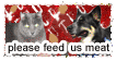say no to vegan pet food by stamploveyou