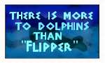 dolphins are scary by stamploveyou