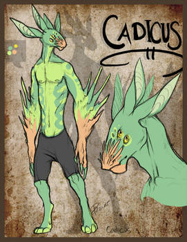 Character: Cadicus