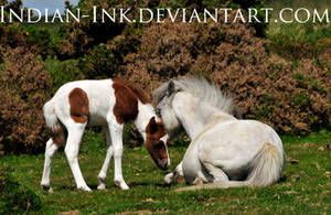 Grey Mare and Skewbald Filly 3 by Indian-Ink