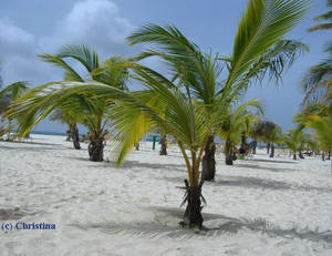 Palm Tree Scenery