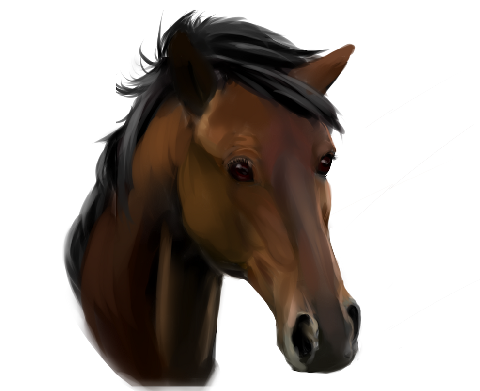 Anatomy Study: Horse Face by Esmire on DeviantArt