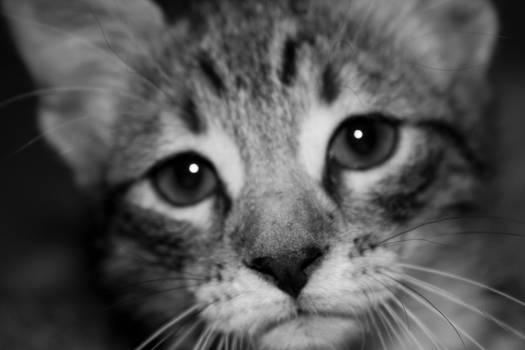 Un-named Kitten
